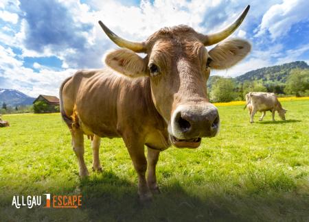 Geschenkgutschein mit Kuh